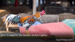 How To Improve The Mental Chicken Fighters