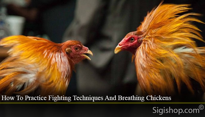How To Practice Fighting Techniques And Breathing Chickens