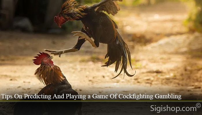 Tips On Predicting And Playing a Game Of Cockfighting Gambling